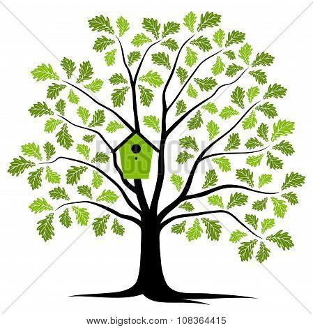 Oak Tree With Nesting Bird Box