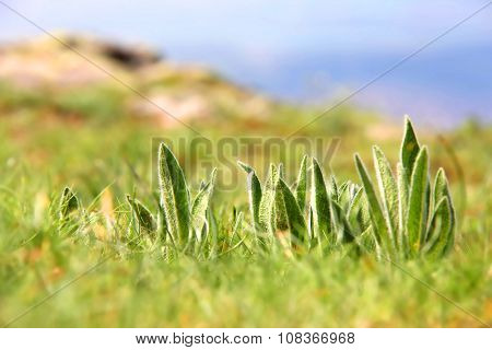 Macrophotography of green plants on the multicolored meadow with blurred background