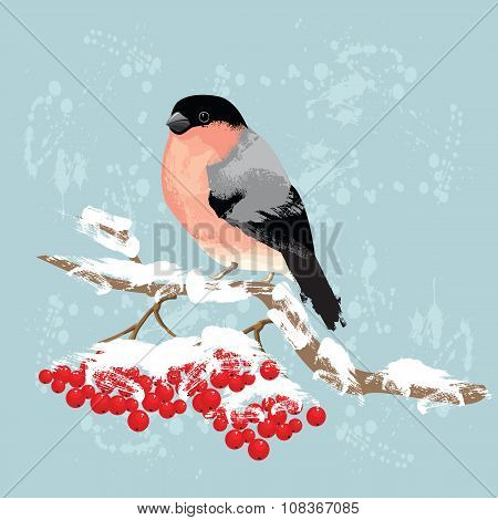 Bullfinch on branch of rowan tree.