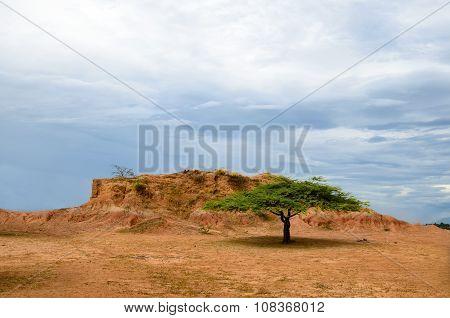 Single Flat-top Green Tree In Orange Savanna Terrain