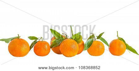 Orange Tangerines On A White Background