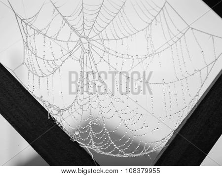 Spider Web Covered With Rime