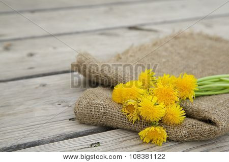 Dandelion Blossoms