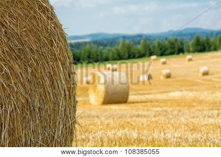 Mowed Cornfield With Straw Bales