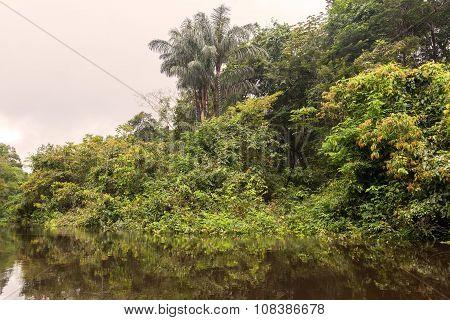 Cuyabeno River, Wildlife Reserve