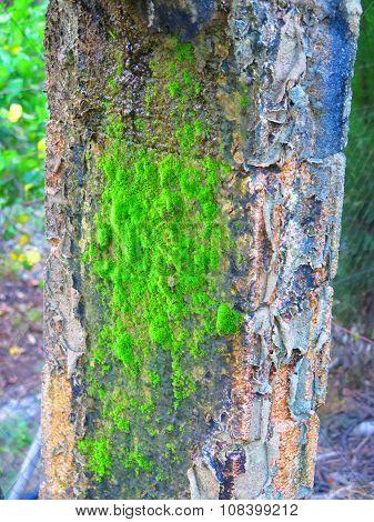 Moss On Concrete Pillar