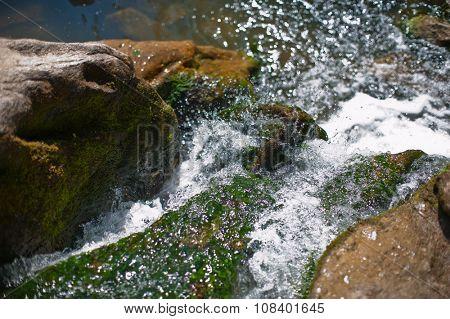 Mountain creek in summer siberian forest