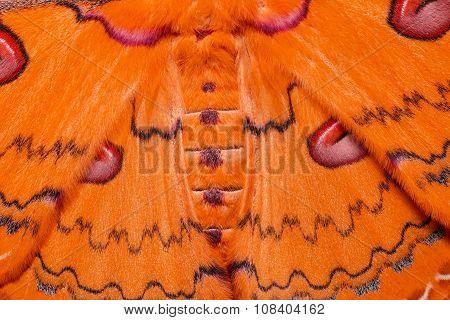 Texture Of Orange Sikkim Silk Moth