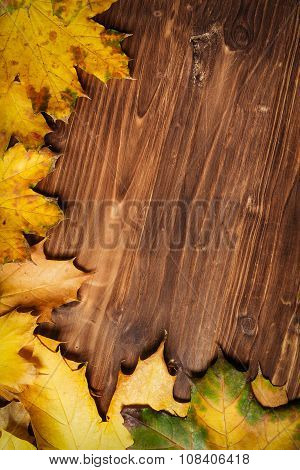 Collection of autumn leaves on wooden background