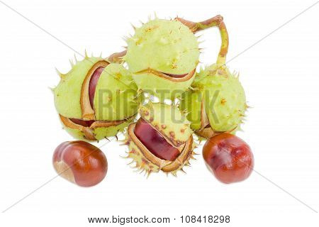 Several Horse Chestnuts On A Light Background