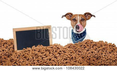 Hungry Dog  In  A Food Rain