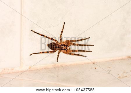 Spider on The Wall