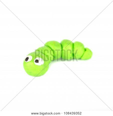 insect Caterpillar