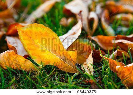 Fallen Autumn Leaves On The Green Grass