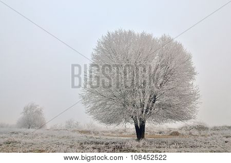 Lonely Tree In A Field