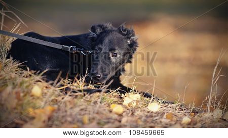 Black Not Purebred Puppy