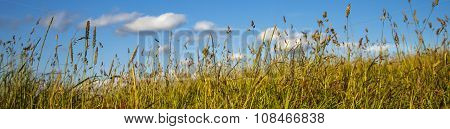 Grass, Blue Sky And White Clouds.