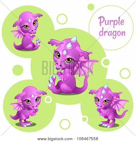 Four cute purple dragon, individual icons
