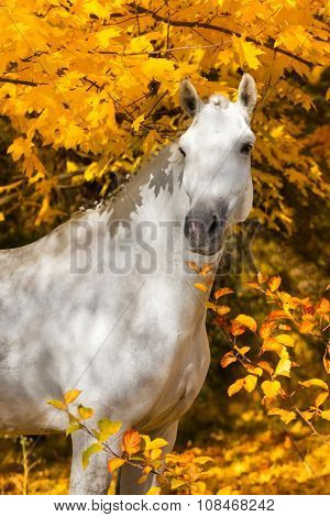 Horse in yellow leaves