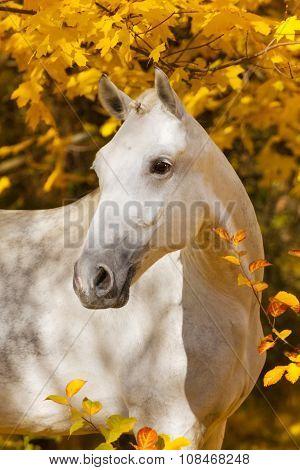 Horse in fall