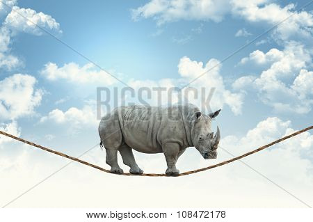 huge rhino walk on rope