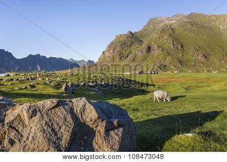 Small Farm On Lofoten Islands, Norway