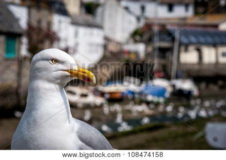Cornwall Village Seagull