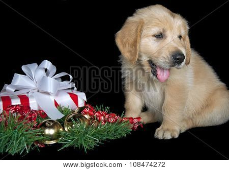 golden retriever puppy with holiday gift