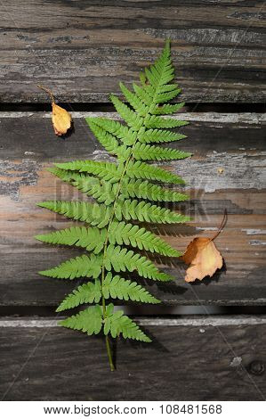 Green Fern Leave On Old Wooden Table