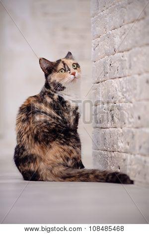 Multi-colored Cat Near A Brick Light Wall