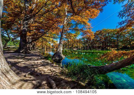 Bright Beautiful Fall Foliage of Garner State Park, Texas
