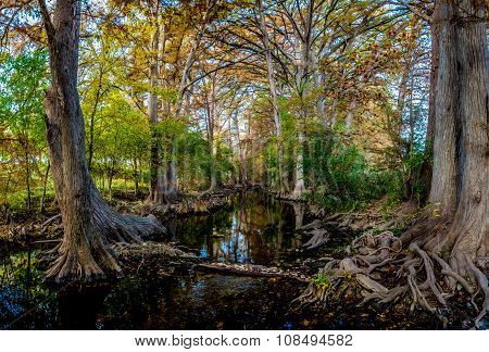 High Resolution Panoramic Shot of Fall Foliage on Cibolo Creek, Texas.