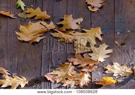 Fallen Oak Leaves On The Wooden Roof