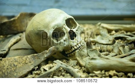 Human skeleton close up detail of the skull laid out in an open grave in a catacomb suitable for horror or Halloween themed backgrounds