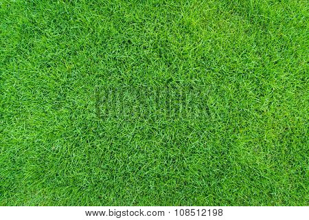 Close-up image of fresh spring green grass