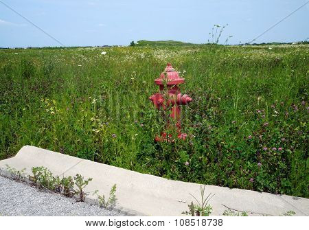 Fire Hydrant in an Abandoned Subdivision