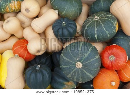 thanksgiving or halloween decorative squash at marketplace