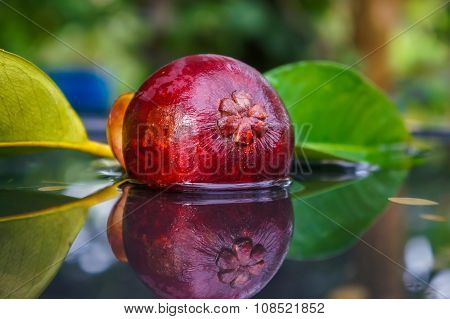Closeup Of Mangosteen In Water With Reflection On Nature Background