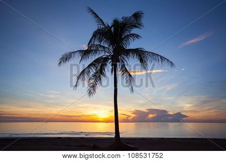 Palm Forest Silhouettes