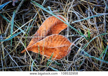 Frozen autumn leafs - abstract natural background