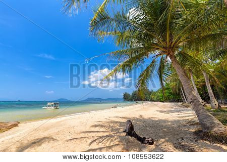 Coconut tree on the sea Vietnam