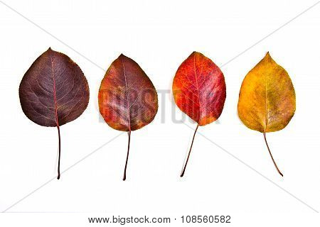 Assort Of Different Autumn Leaves Isolated On White Background.