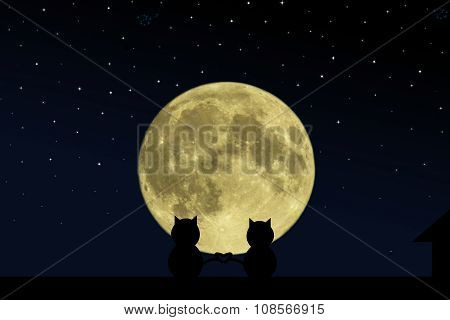 Two black cat crossed their tails in the form of heart on the roof of the house at the time of the f