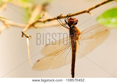 Dragon fly clinging to a plant's stem on a blurred background