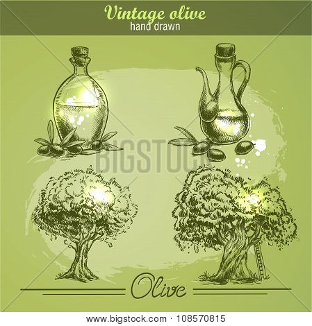 Vintage hand drawn set of olive tree and bottle. Sketch style.