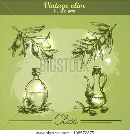 Vintage hand drawn set of olive branch tree and bottle. Sketch style.