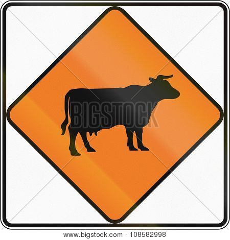 New Zealand Temporary Road Sign - Cattle