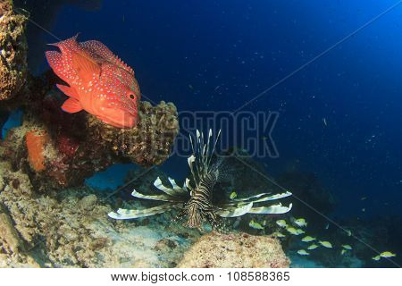Coral Grouper fish and lionfish