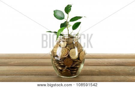 Plant growing in bowl of coins on a table isolated on white