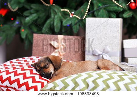 Cute puppy sleeping on pillow on Christmas background